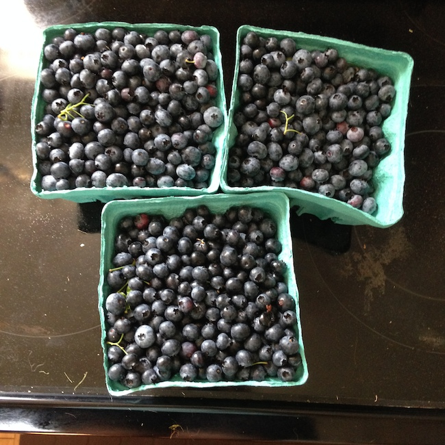 dame farm blueberries koskie